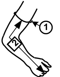 PP-1 ranka